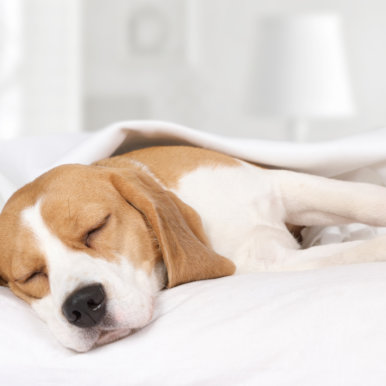 Hotel Fabian in downtown Helsinki is pet-friendly